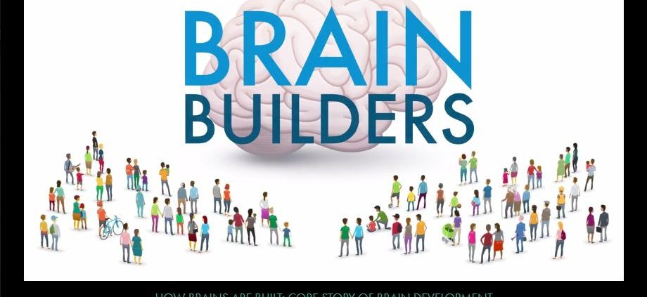 brain-builders-how-brains-are-built
